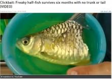 【海外発!Breaking News】体半分失った魚、6か月生き延びる(タイ)<動画あり>