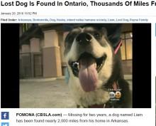 【海外発!Breaking News】アーカンソーで姿を消した飼い犬、3,200km離れたカリフォルニアで発見!