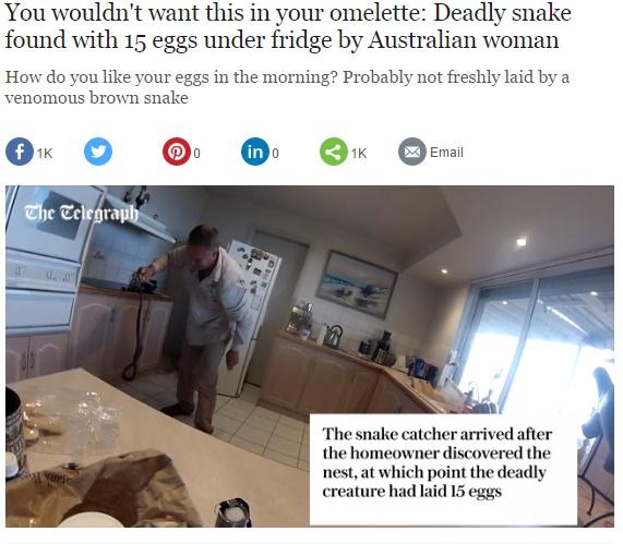 【海外発!Breaking News】冷蔵庫下から世界最恐種のヘビが! 豪アデレードで活躍するヘビ駆除業者