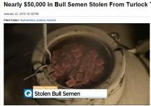 【海外発!Breaking News】優良牛の精液盗まれる その価値なんと600万円(米)