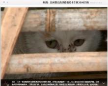 【海外発!Breaking News】広東省の食肉処理業者へ向かっていた猫2千匹 動物保護団体が救う