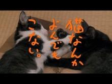 【エンタがビタミン♪】風間俊介、小沢健二を「生き神様」と敬愛 ボーダーシャツにも思い入れ