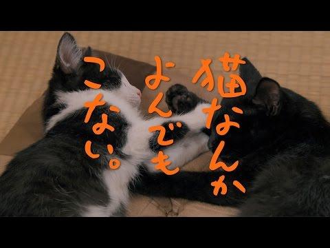 風間俊介が主演する映画『猫なんかよんでもこない。』(画像はYouTubeのサムネイル)
