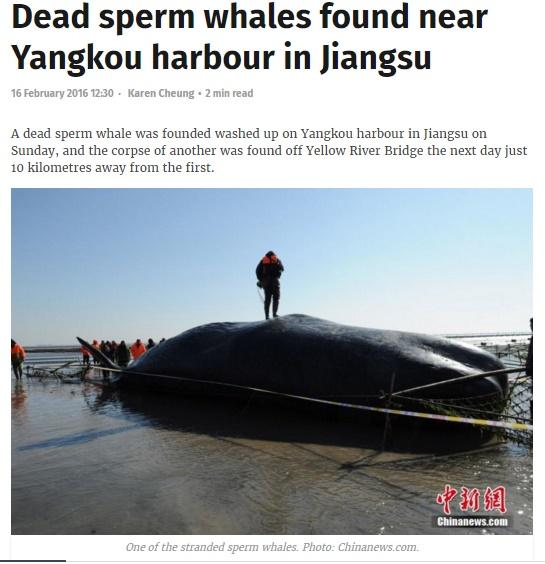 【海外発!Breaking News】巨大マッコウクジラ、中国・江蘇省海岸に相次いで打ち上げられる