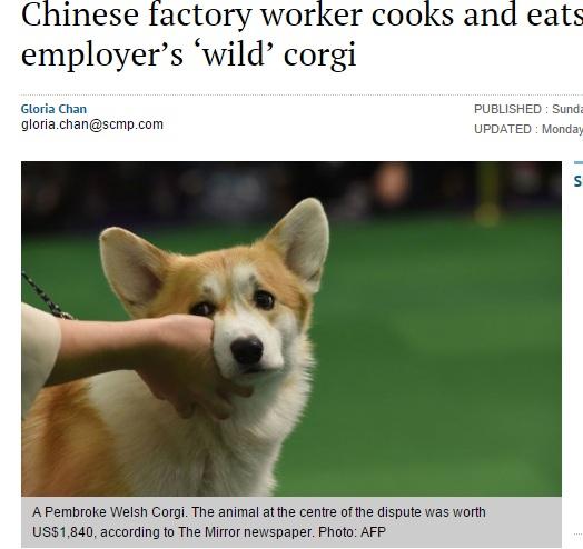 【海外発!Breaking News】野良犬だと思って食べたコーギー、実はボスのペットだった(中国)