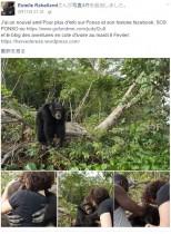 【海外発!Breaking News】動物実験の末、西アフリカの島に捨てられたチンパンジー 突然の訪問者にハグ