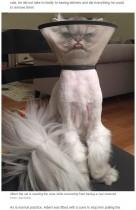 【海外発!Breaking News】不機嫌すぎるペルシャ猫 SNSで大人気に(米)