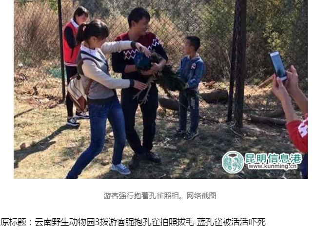 【海外発!Breaking News】今度はクジャク 観光客「美しいから欲しい」と羽をむしり死なせる(中国)