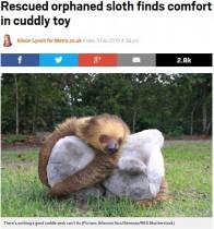 【海外発!Breaking News】保護されたナマケモノ達、ぬいぐるみで心のケア(ブラジル)