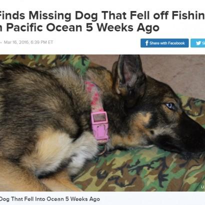 【海外発!Breaking News】漁船から転落した犬、5週間後に海軍が発見 生きていた!(米)