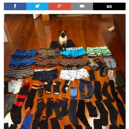 【海外発!Breaking News】男性用パンツが大好きな雌猫 ソックスも含め61点盗む(NZ)