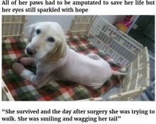 【海外発!Breaking News】韓国の食肉処理工場から救出された犬 足先すべて壊死