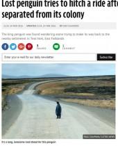 【海外発!Breaking News】孤独なペンギン ヒッチハイクで旅を続ける(フォークランド諸島)