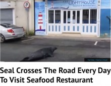 【海外発!Breaking News】レストランに通うアザラシ 毎日道路を横切って(アイルランド)<動画あり>