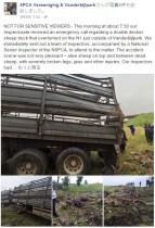 【海外発!Breaking News】ヒツジを運搬中の惨事 トラック横転し200頭死ぬ(南ア)