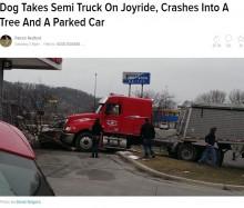【海外発!Breaking News】大型トラックによる衝突事故 なんとラブラドール犬が運転!(米)