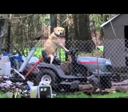 【海外発!Breaking News】犬が芝刈り機でお仕事!? 米TV中継が偶然捉えたおもしろ映像