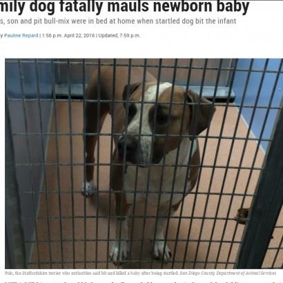 【海外発!Breaking News】生後3日の赤ちゃん、飼い犬に噛み殺される(米)