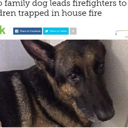 【海外発!Breaking News】勇敢なペット犬、炎に包まれた家の中へ 子供2人を救う(米)