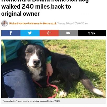 【海外発!Breaking News】元の飼い主のところへ! 12日間380キロ超を旅した犬(英)