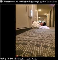"""【エンタがビタミン♪】スギちゃん """"ワイルド行動""""の目撃情報が続く"""