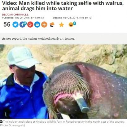 【海外発!Breaking News】セイウチとの2ショットを試みた見学者 プールに引きずり込まれ溺死(中国)