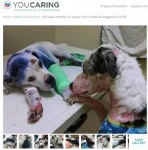 【海外発!Breaking News】瀕死の犬に寄り添う犬 犬同士しか分からぬ心のつながりに涙(米)