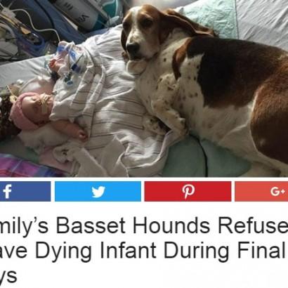 【海外発!Breaking News】赤ちゃんの最期まで寄り添った2頭の飼い犬(米)