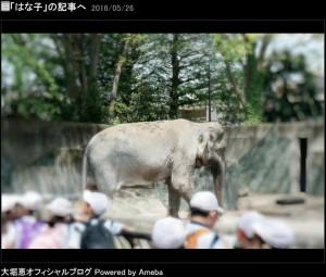 人気者だったはな子(出典:http://ameblo.jp/ohorimegumi)