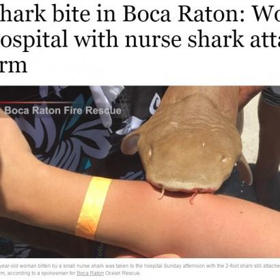 【海外発!Breaking News】サメに襲われた女性 噛みつかれたまま病院へ(米)