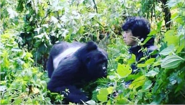 【エンタがビタミン♪】TOKIOとイノシシ、庄司智春とゴリラ 緊迫した場面に野生動物との共存考える