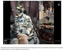 【海外発!Breaking News】爆弾探知犬24頭殺害される 契約解消が原因か(クウェート)