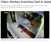 【海外発!Breaking News】ここまで悪さを覚えたサル 宝石店から売上金ごっそり盗む(印)