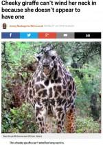 """【海外発!Breaking News】""""短い首""""のキリンは「大切なメッセージ」 タンザニアの国立公園にて"""
