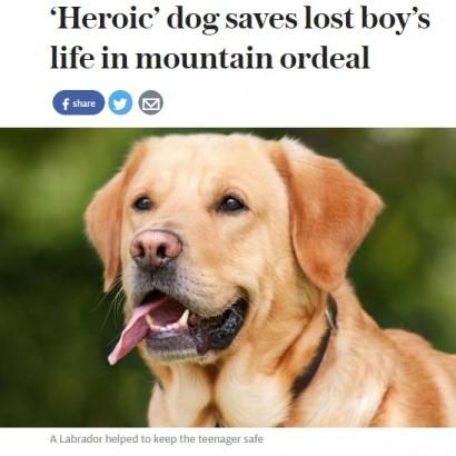 【海外発!Breaking News】「ラブラドール犬が助けてくれた」 メキシコの岩山で遭難も44時間生き抜いた少年