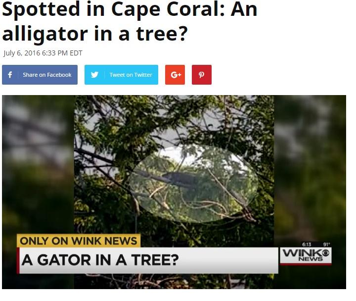 【海外発!Breaking News】フロリダで木の上にワニ! 水辺を這うばかりじゃなかった!?