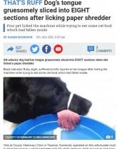 【海外発!Breaking News】シュレッダー要注意! 飼い犬、舌を突っ込み八つ裂きに(英)
