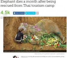 【海外発!Breaking News】観光客を背中に乗せ60年 やっと引退も1か月でひっそりと逝ったゾウ(タイ)