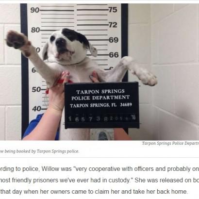 """【海外発!Breaking News】犬のマグショット公開 """"逃亡""""容疑も「取り調べに答えない」とフロリダの警察"""