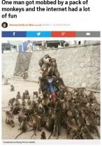 【海外発!Breaking News】「サルにエサを与えてはダメ」英メディアも警告 Redditに仰天写真