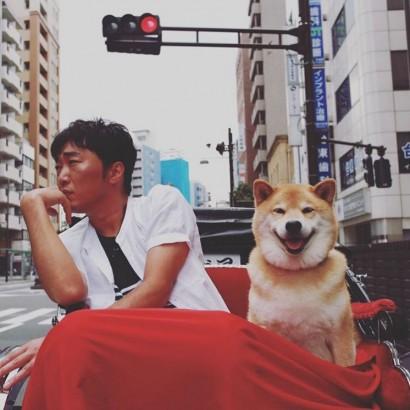 """【エンタがビタミン♪】""""セカオザ""""小沢一敬、大人気の柴犬""""まる""""と浅草で人力車デート"""