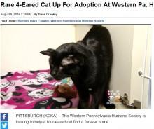 【海外発!Breaking News】耳が4つ とても珍しい黒猫の「BATMAN」くん(米)
