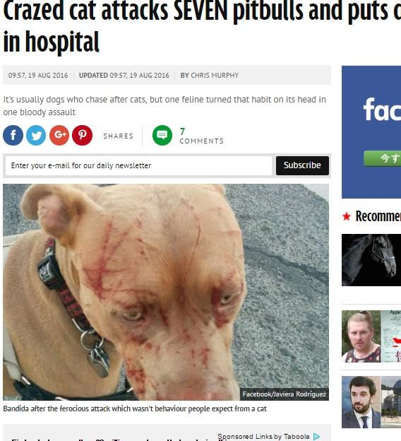 ピットブル、ネコの攻撃で血だらけに(出典:http://www.mirror.co.uk)