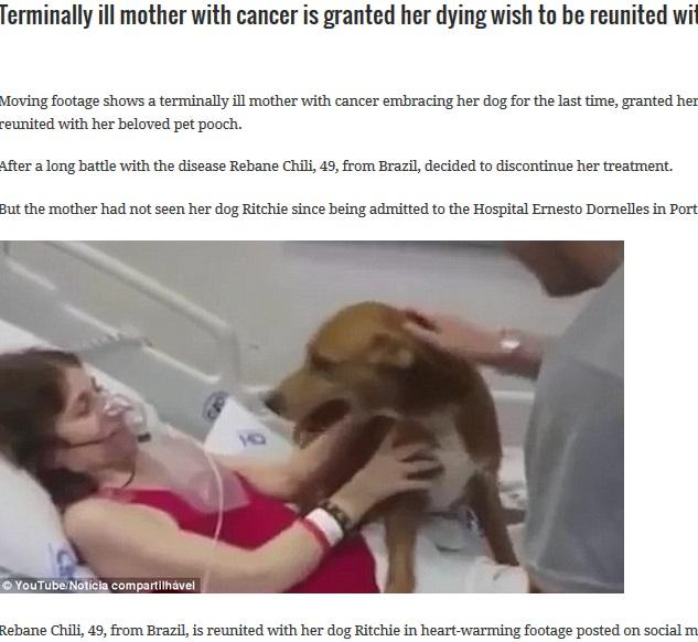愛犬、末期がんの飼い主のもとへ(出典:http://aidjournal.com)