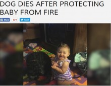赤ちゃんに覆いかぶさり、炎から守った犬 自らは犠牲に(米)
