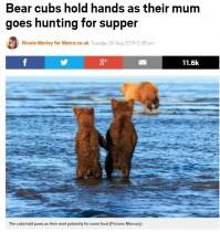 【海外発!Breaking News】母クマの狩りを、手をつないで見守る2頭の子グマ(米)