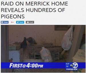 【海外発!Breaking News】家の中にハト350羽を放し飼い 酸素マスクをして暮らしていた男性(米)