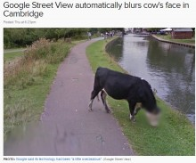 【海外発!Breaking News】Googleストリートビューが牛の顔にモザイク G社「ちょっと頑張りすぎました」とコメント(英)