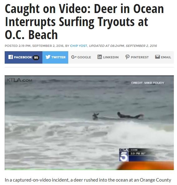南カリフォルニアのビーチでシカがサーファーに紛れ込む(出典:http://ktla.com)