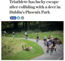 【海外発!Breaking News】転倒して頭を強打した者も 自転車ロードレースに鹿が乱入(アイルランド)